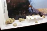 Fossili del museo