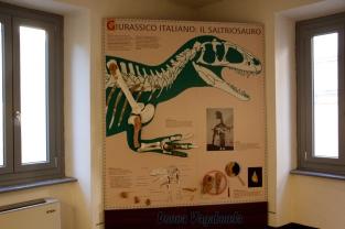 Il Saltriosauro