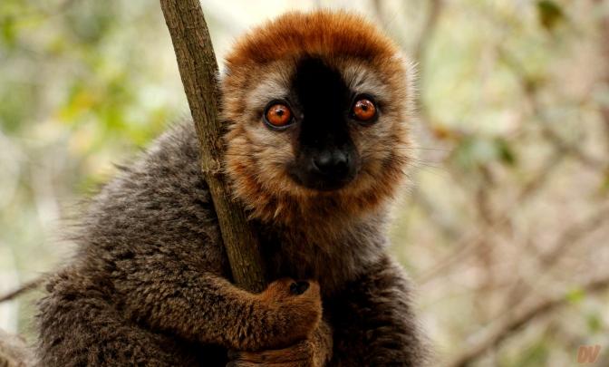 Diario di viaggio: Madagascar – giorni 11 e 12