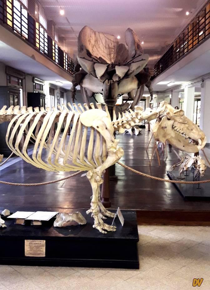 Il museo di febbraio: la Collezione di Zoologia dell'Università di Bologna
