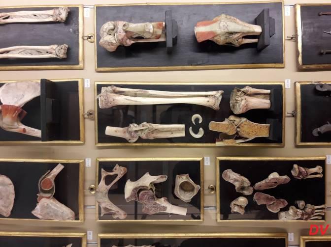 """Il museo di aprile: la Collezione delle Cere Anatomiche """"Luigi Cattaneo"""""""