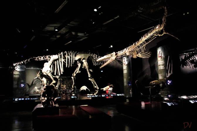 Il Museo del Mese: il Museo della Confluenza di Lione